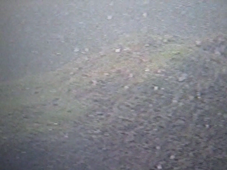 Salmon webcam