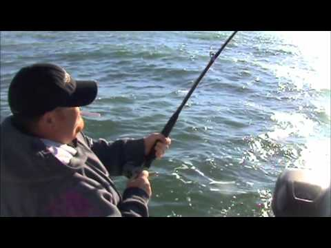 Texas Bull Red Report 11/6/10 in HD