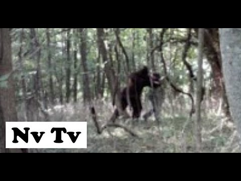 INCREDIBLE!! DRONE CAM FILMS REAL BIGFOOT SIGHTING!! CAUGHT ON VIDEO!! - Ohio, USA (2012) - HD