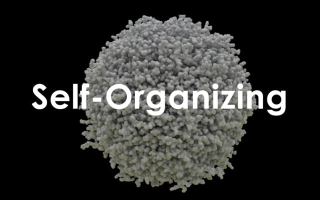 Cellular Growth: Self-Organizing of Basic Behaviours