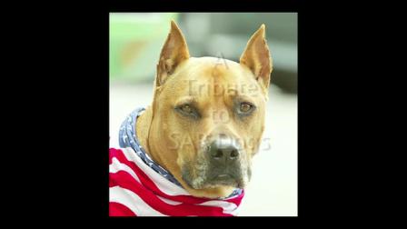 Homenaje a los perros del 11 de Septiembre