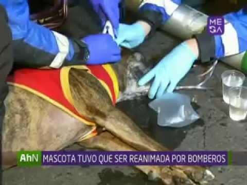BOMBEROS CONTROLO GRAN INCENDIO DE EDIFICIO EN CENTRO DE SANTIAGO (RESCATE DE CAN) - CHILE / Vídeo Destacado de La Hermandad de Bomberos