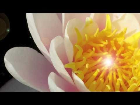 OSHO Dynamische Meditation - Anleitung auf deutsch