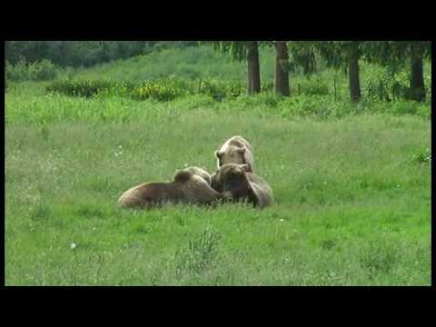 Tolle Bärenkinder im Wildpark Poing bei München - 2009 Mai