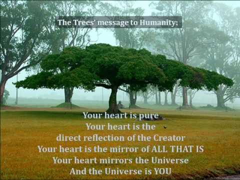 Listen With Your Heart ~ We Are The Trees
