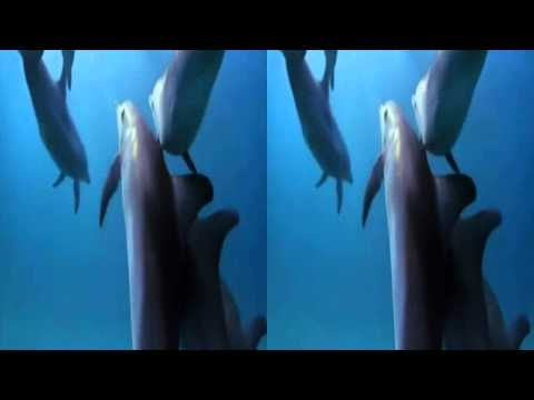 DOLPHINS AND MEDWYN GOODALL RELAXATION MUSIC 3D