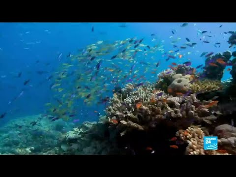 Environment: Great Barrier Reef irreversibly damaged by global warming