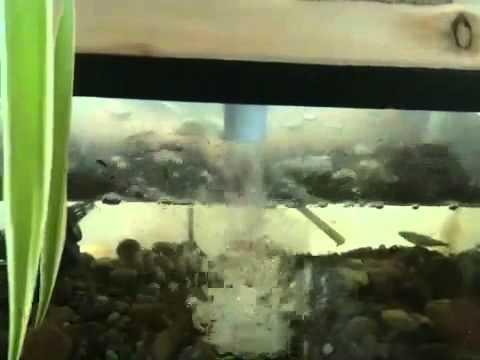 2nd indoor aquaponics
