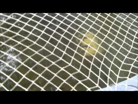 Aquaponics Garden Update - Sept 2, 2011