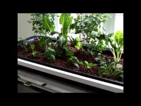 Aquaponics   Economical