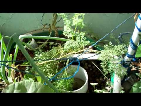 Aquaponics in Jeddah