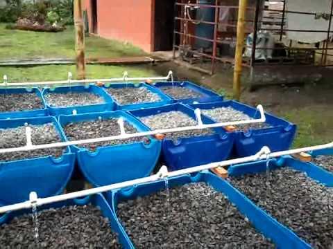 aquaponics setup