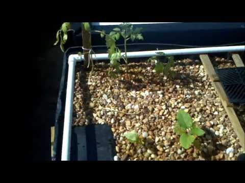 Backyard Aquaponic System
