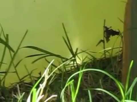 SUN FIRE INSIDE MY AQUAPONICS FISH TANK