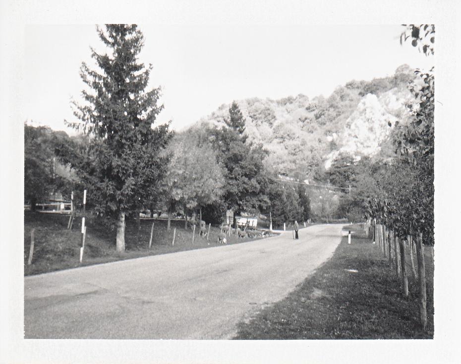 A view of: Strada Provinciale 84 (Un pastore mena alcune capre al pascolo) - Roccaraso