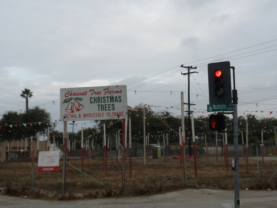 Christmas Tree Lot 2012