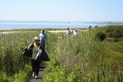 Long Wharf Nature Preserve Volunteer Opportunity