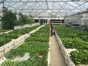 Aquaponic Farm Design