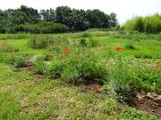 Eleusis Garden