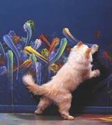 Even Cats Vent Creatively