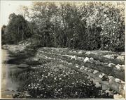 Log and Stone Levee, 1905 or 1912