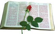 """""""Bible and The Rose"""""""