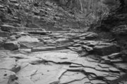 IMG_4986_another_creek_bed_greyscale