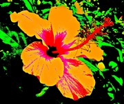 Andy Warhol Hibiscus #1