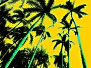 Palms-Ft.Lauderdale