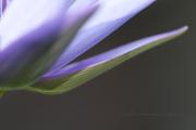 sweet lotus