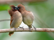 Art of Birds Photography