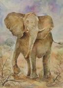 ช้าง002