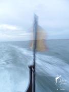 Aube sur la côte belge