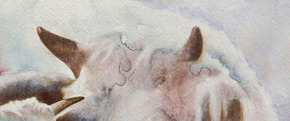 Paquetd'vaches ( détail)
