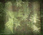 PKinard photo,Sous les papiers d'ors, le végétal.