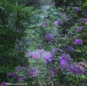 le jardin de mon père mai 2016.photo PKinard