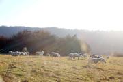site Moutons a Lagney 3