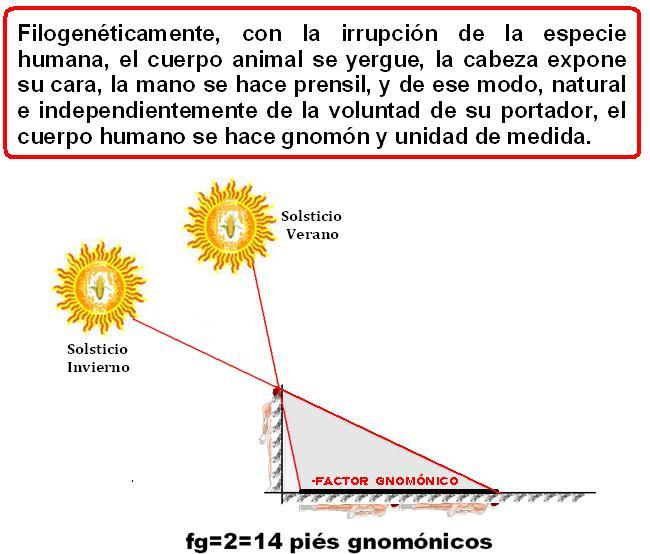 factor gnomónico