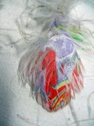 Marbled Cockatoo Feather~small size