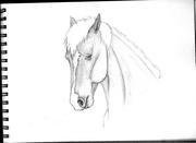 Häst med smal bläs