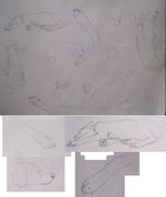 Daggemar skisser