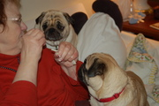 Auntie Carla and the Puggies2