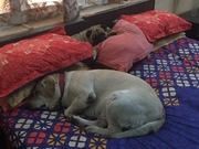 Boys claim my bed as their own (so what's new!)