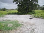 Alligator Creek Campsite