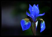 florazul
