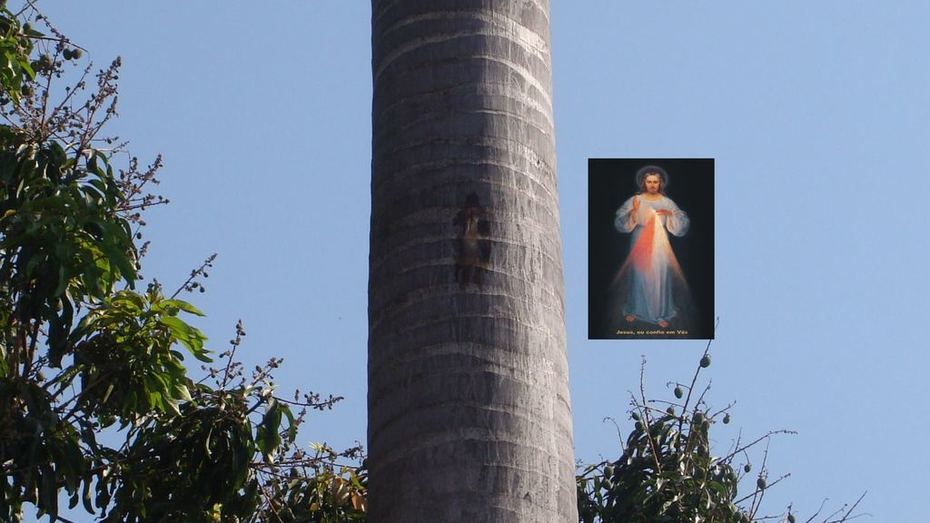 Jesus na palmeira imperial