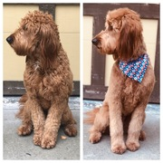 Before/After Summer Grooming