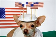 Patriotic Animals