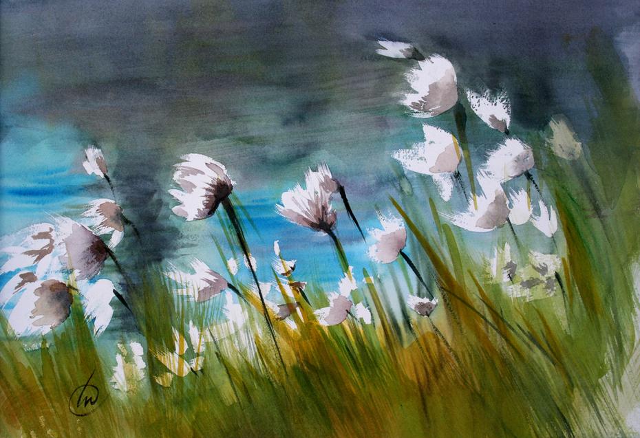"""""""Linaigrettes"""", fleurs sauvages des Hautes-Fagnes"""