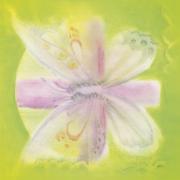 Délicat papillon du poème
